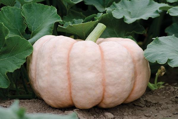 """Top 10 loại rau củ """"đẹp, độc, lạ"""" được săn lùng trồng tại nhà-6"""