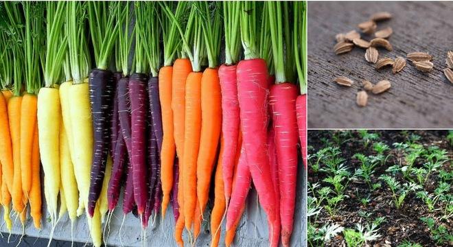 """Top 10 loại rau củ """"đẹp, độc, lạ"""" được săn lùng trồng tại nhà-7"""