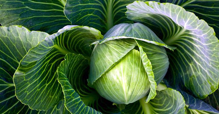 Top 5 loại rau củ ăn đến đâu dinh dưỡng hấp thụ đến đó-3