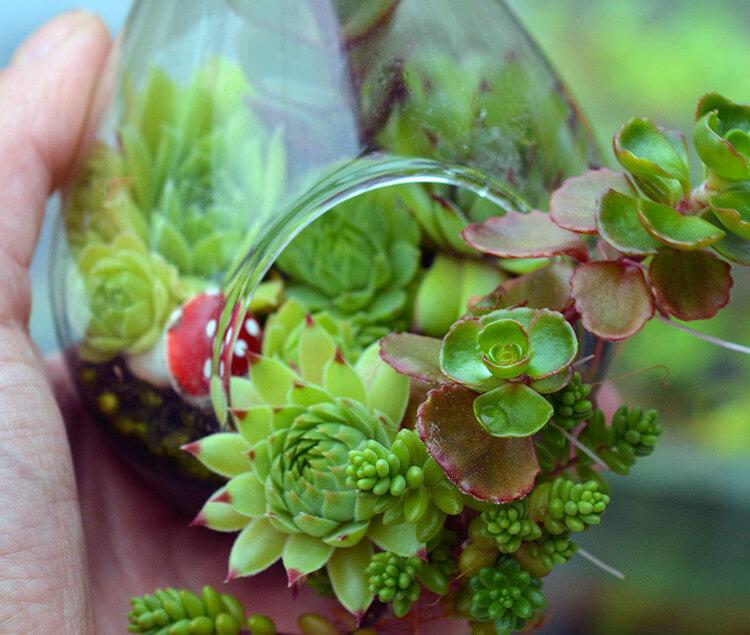 Trồng sen đá: Vừa dễ sống, lại đẹp nhà, rước đầy may mắn tài lộc-2