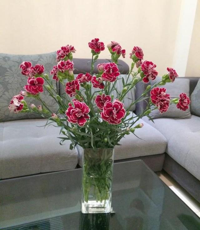 Cắm hoa cẩm chướng xoè trong bình