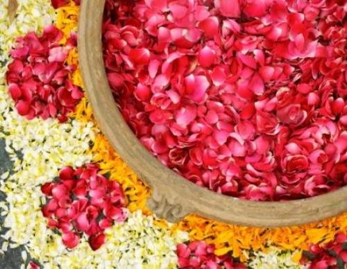 Cánh hoa hồng cũng có tác dụng chống nẻ môi hiệu quả đấy, bạn có tin không?