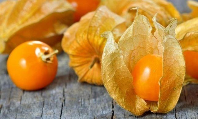 Quả tầm bóp khi chín có màu vàng óng, ăn có vị chua chua, ngọt ngọt