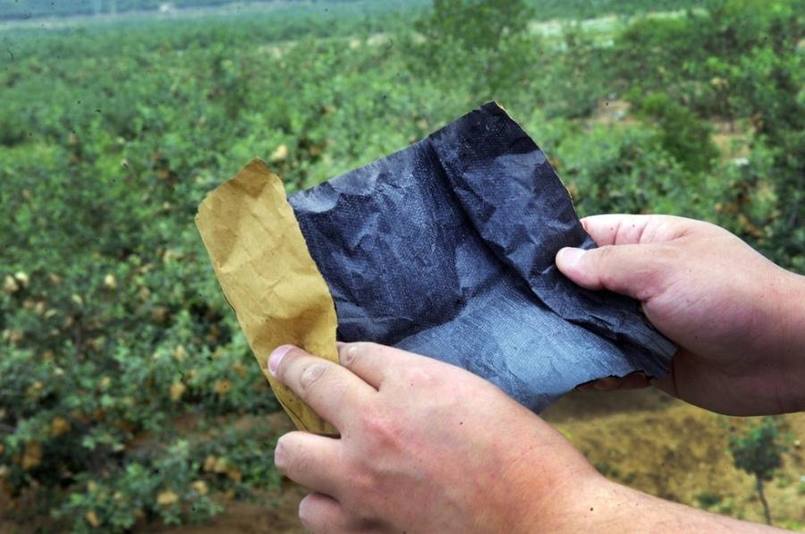 Mở túi ra, những hạt bột thuốc trừ sâu màu trắng đục lấm tấm trên nền giấy tái chế đen kịt, bốc mùi hăng hắc.